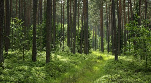 Biotopbäume im Nürnberger Reichswald