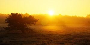 Vogelbeobachtung bei München: Die Garchinger Heide