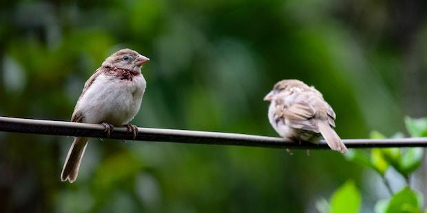 Unsichtbare Lauscher: Der Hörsinn der Vögel