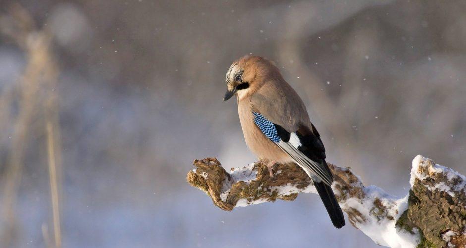 Vogelfotografie im Winter