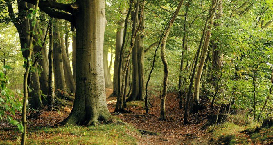 Das Lübecker Lauerholz