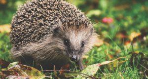 Milde Winter und ihre Folgen in der Tierwelt