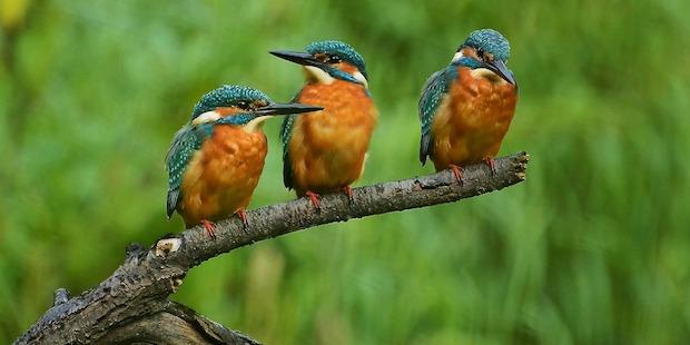 Das Fränkische Seenland – ornithologisch herausragende Feuchtgebiete