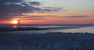 Vögel an der Förde – Das Naturschutzgebiet Schleimündung