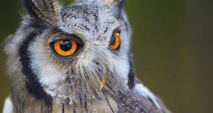 Die Sehkraft der Vögel