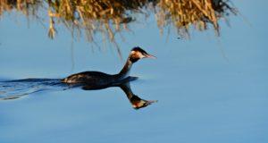 Wasservögel beobachten: 7 Tipps