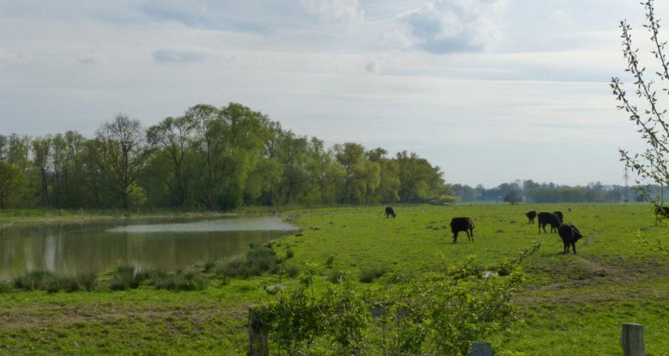 Die Kiebitzwiese in Nordrhein-Westfalen