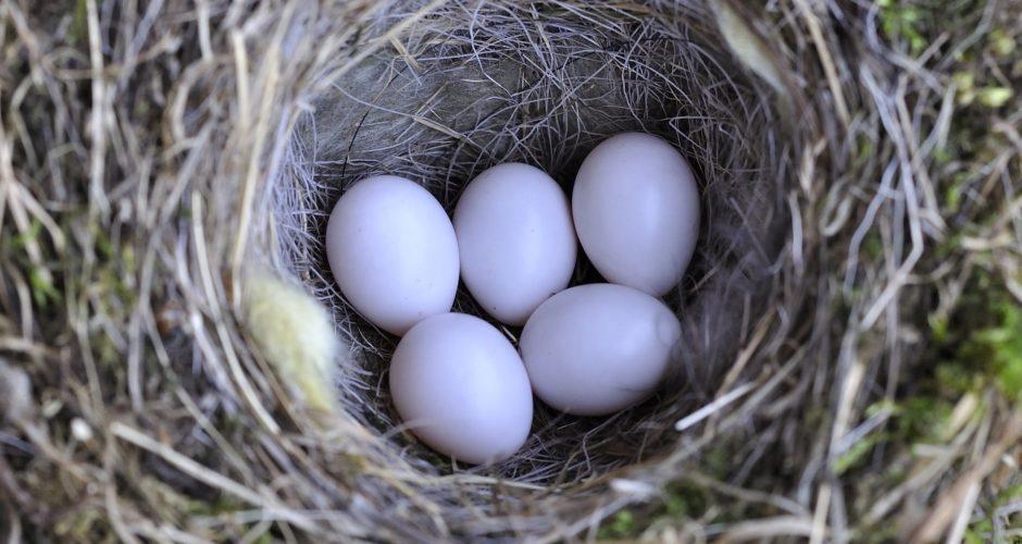 Ursprung neuen Lebens: Das Vogelei