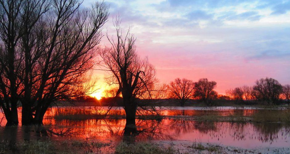 Hotspot am Fluss: Der Nationalpark Unteres Odertal
