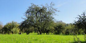 Lebensraum Streuobstwiese – Ein wertvoller Hotspot
