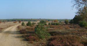 Wandern und Beobachten im NSG Forsthaus Prösa