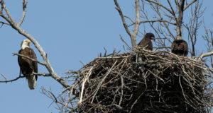 Rekorde aus der Vogelwelt: Nester und Gelege