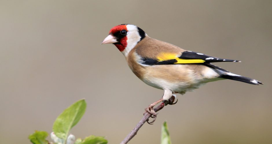 Artenvielfalt: Vögel machen glücklich