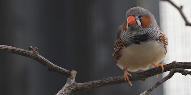 Neue Studie zu Vögeln und Straßenlärm