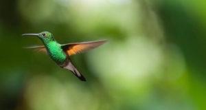 Von Pinguin bis Kolibri – Diese Merkmale haben alle Vögel