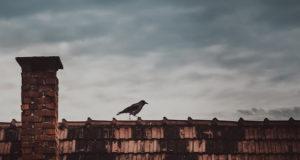 Vögel in der Mythologie
