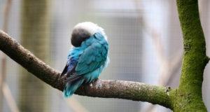 Warum fallen Vögel im Schlaf nicht vom Baum?