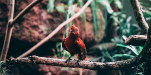 Kaffee für Mensch und Vogel