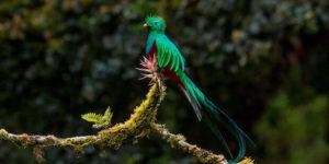 Der Quetzal – Gottgleicher Nationalvogel