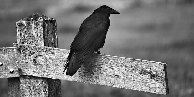 Können Vögel Trauer empfinden?