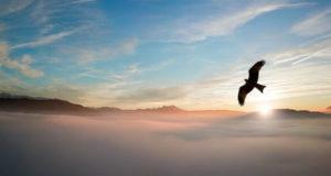 Die Vögel und das Wetter