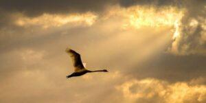 Vogelpatenschaft – Beitrag für den Vogelschutz