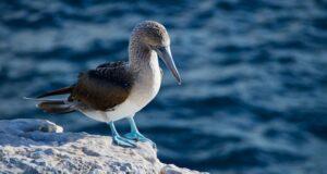 Die Vogelwelt der Galápagosinseln