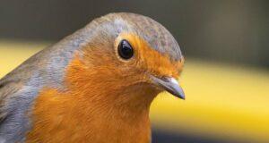 Vögel navigieren mit Quantensensoren