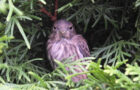 Was tun Vögel bei Gewitter?