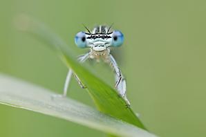 Gewinner des Fotowettbewerbs Naturfoto 2012